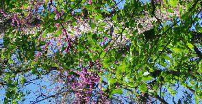 Τεστ Αλλεργίας στην Γύρη Δέντρων